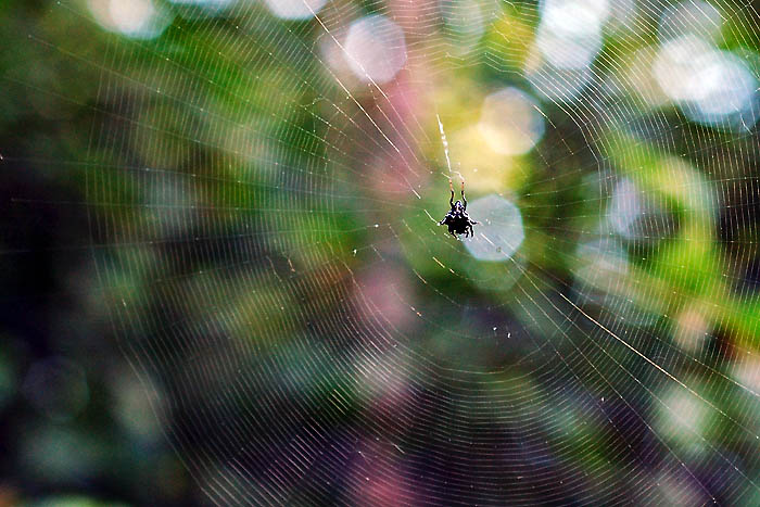 Surf THIS Web . . .