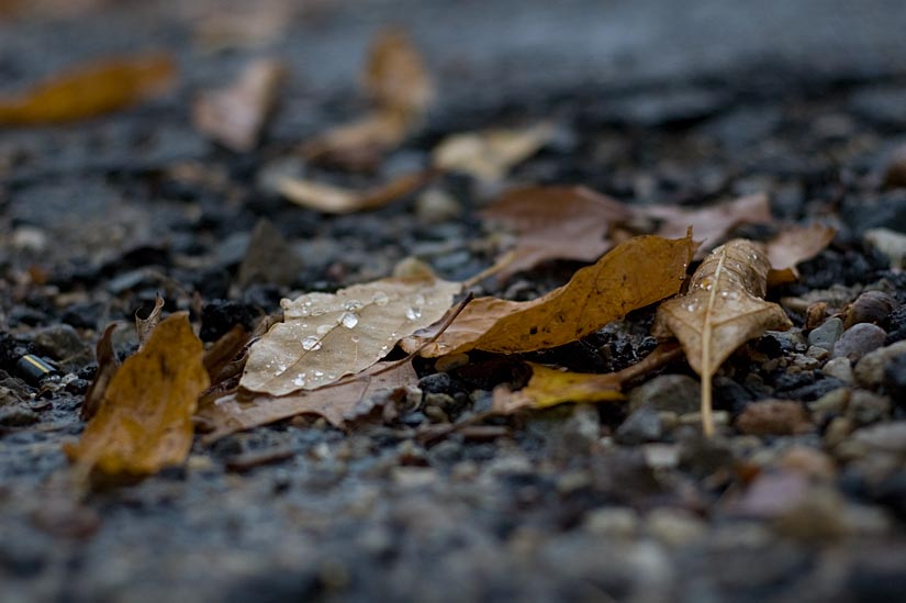 Rain drops & dead leaves